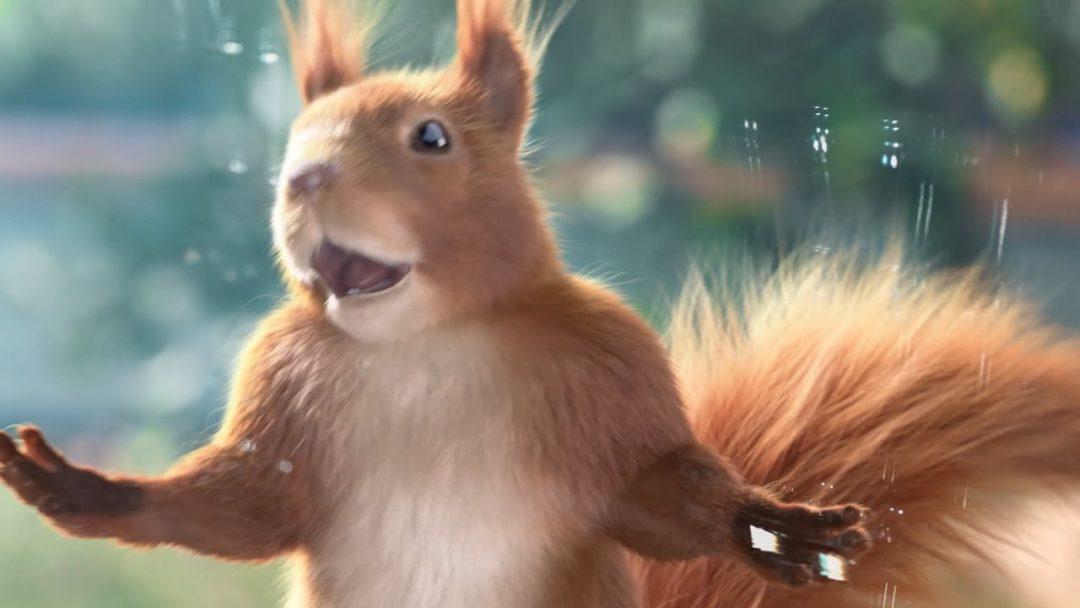 FELIX / Squirrel